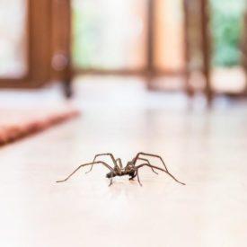 thérapie contre la peur des araignées, arachnophobie