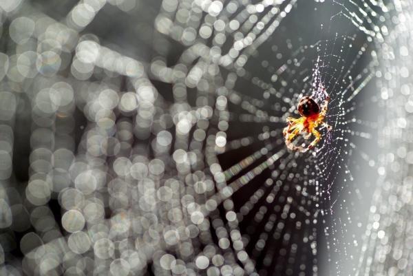 7 astuces pour éloigner les araignées